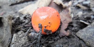 Пейнтбольный шар